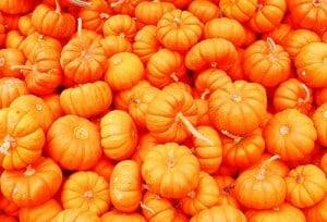 Pumpkins 300x204 - Pumpkin Beer