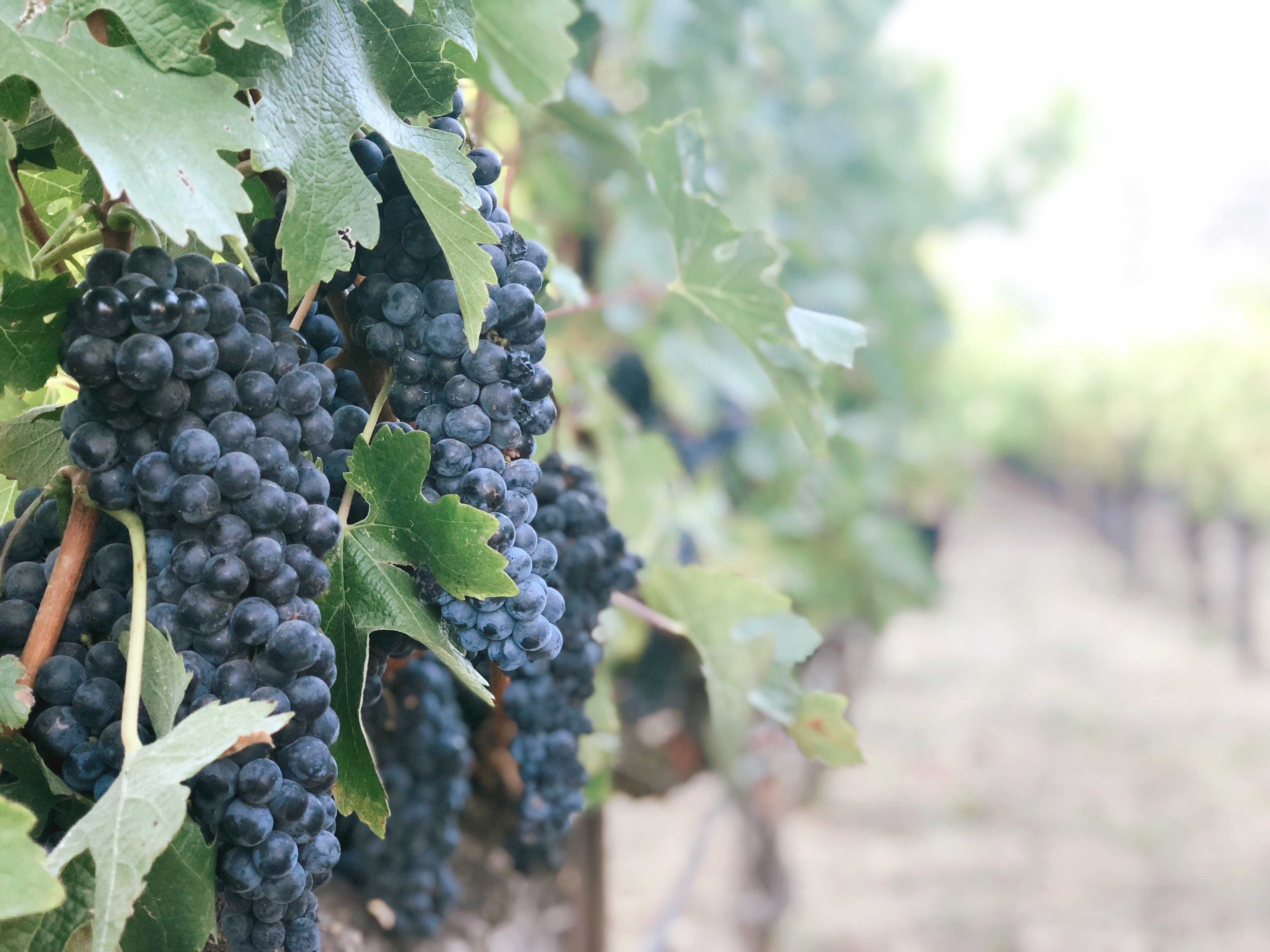 Places to Imbibe Wineries of the World