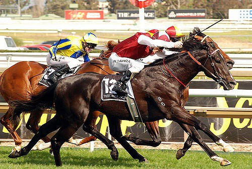3940712886 30b55f172b z - Travel to Australia for the Spring Racing Carnival