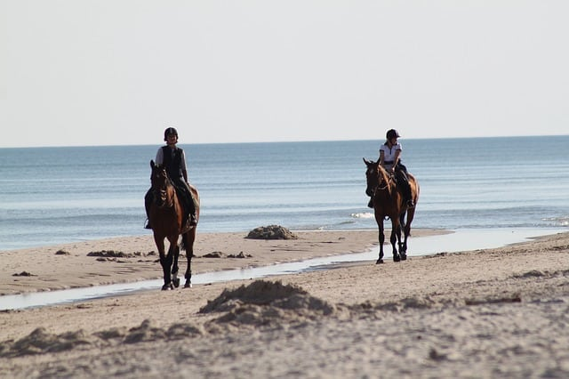 horses 325219 640 - 5 Luxury Experiences in the Caribbean