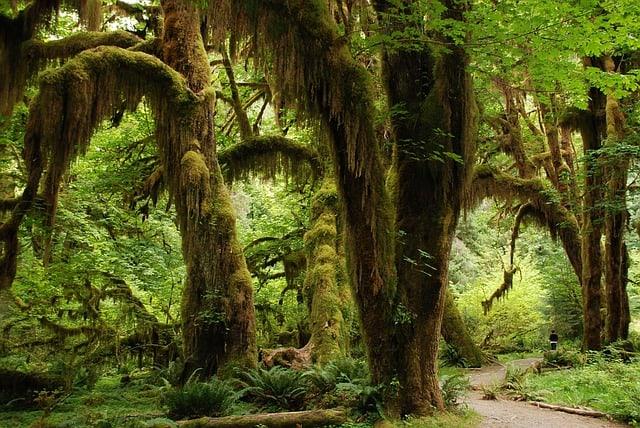 nature 1367681 640 - 5 Romantic Activities to do in Fiji