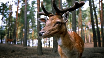 5 Tips to be a more Successful Aspiring Deer Hunter?