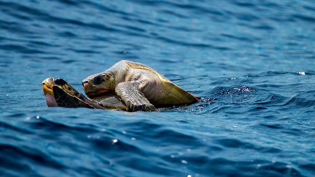 turtle 1875842 640 - 5 Luxury Experiences in the Caribbean