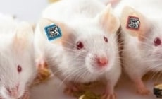 Would You Believe? Hi-Tech mice