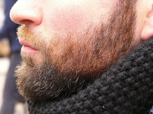 2373734320 7f40cf8525 z - Beard Maintenance 101
