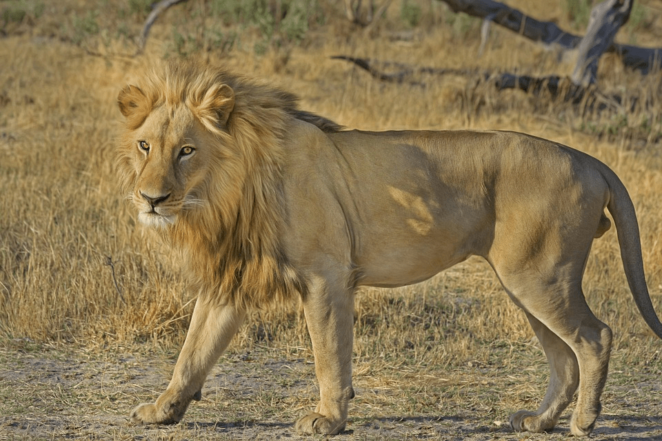 3 2 - On the Trail of Big Game in Africa