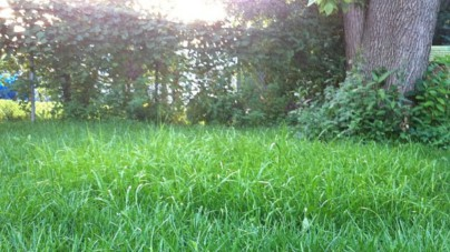 Tips for Taming a Backyard Gone Wild