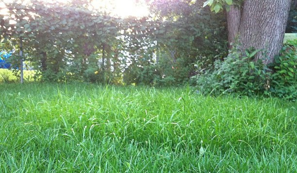 overgrown yard - Tips for Taming a Backyard Gone Wild