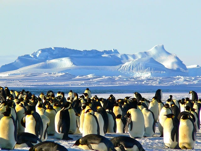 emperor penguins 429127 640 - Facts About Cruising to Antarctica