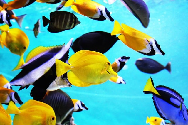 tropical fish 2395619 640 - Why Betta Fish Make Great Pets