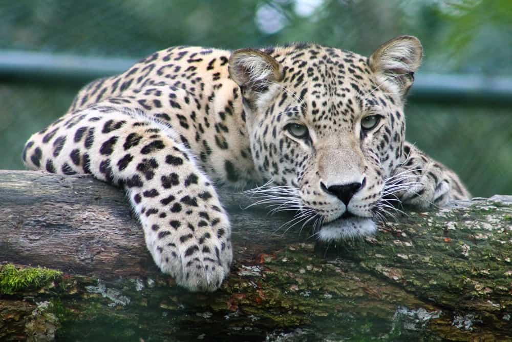 5 adopt endangered species - Eight Birthday Ideas for the Man Who Has Everything