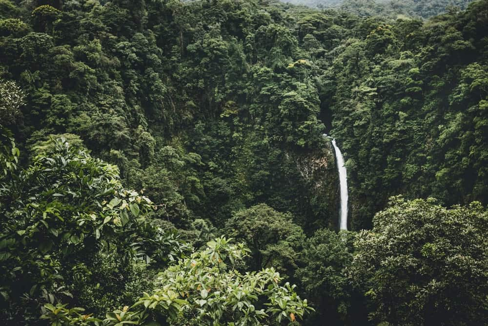 7 acre of rainforest - Eight Birthday Ideas for the Man Who Has Everything
