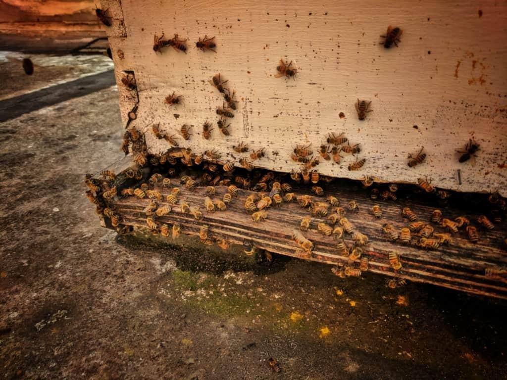 Beekeeping Mobile Alabama 1024x768 - Raw Travel In Sweet Home Alabama