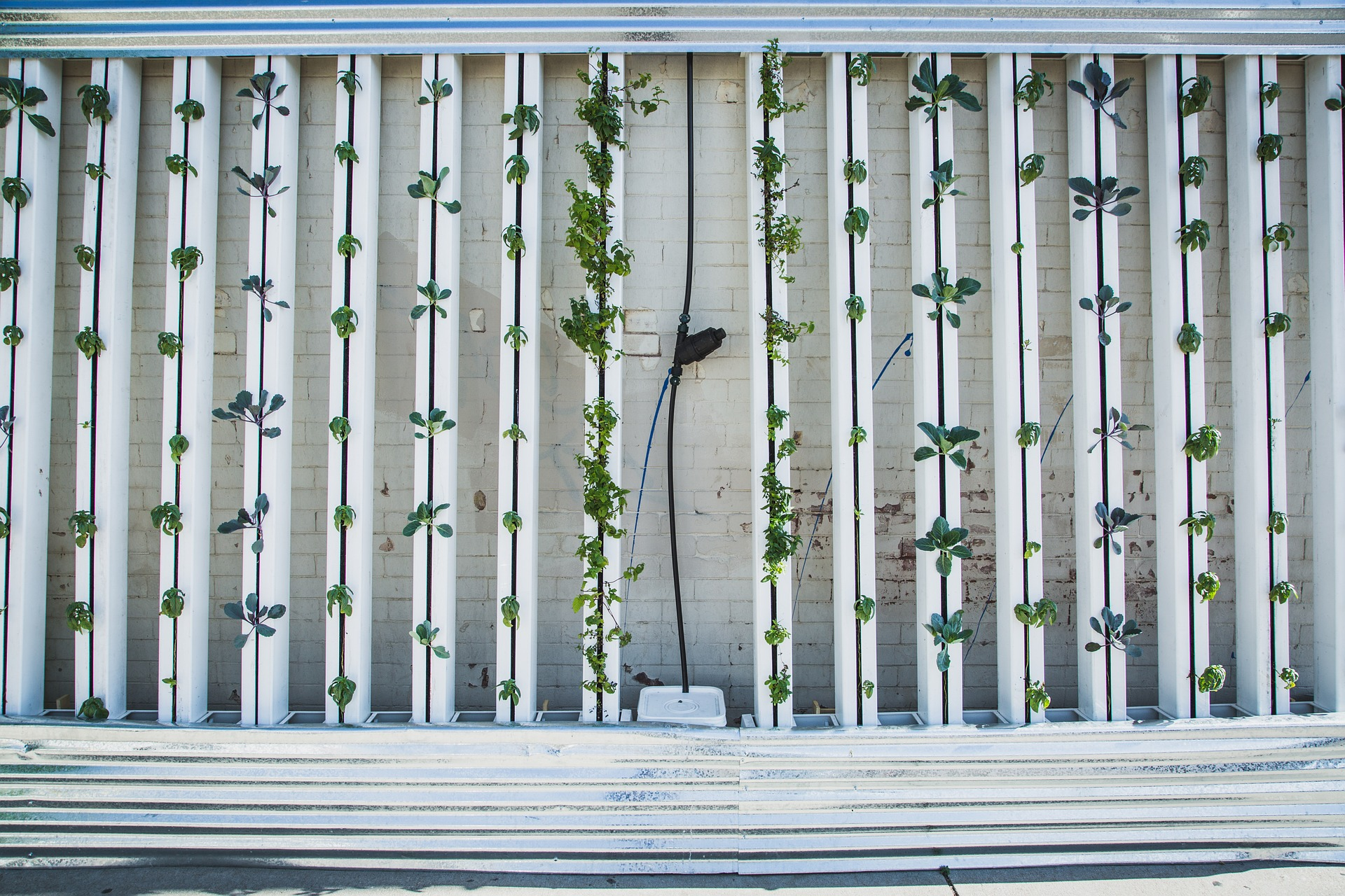 hydroponics or verticle farming