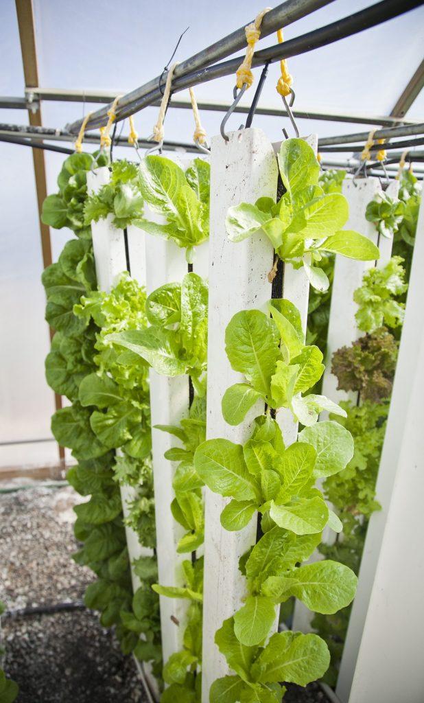 vertical farm 618x1024 - Vertical Farming