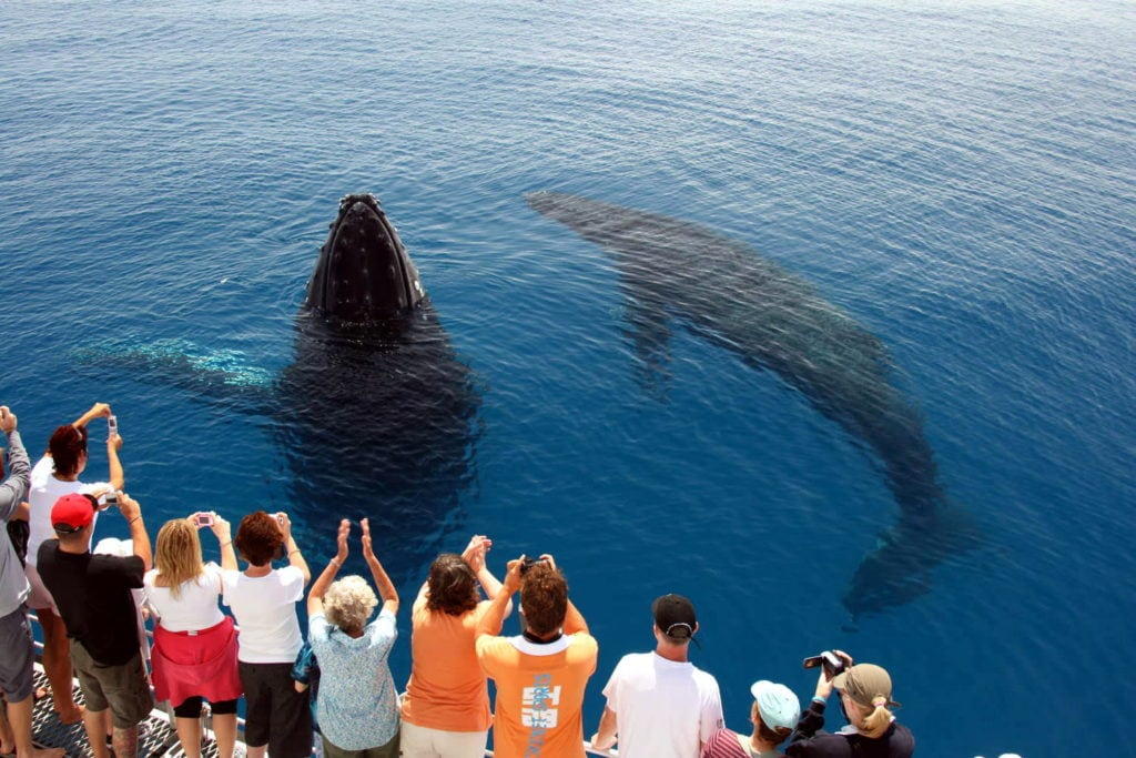 whale watching 1024x683 - Why Australia is the Best Place in the World to go Whale Watching