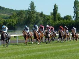 5-Step Horse Betting