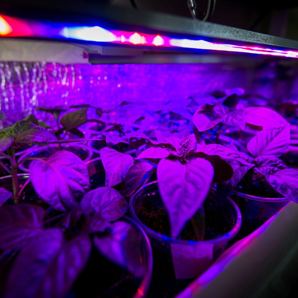 Benefits of LED Grow Light 1024x1024 - Benefits of LED Grow Light on Plants and The World