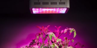 LED Grow Light on Plants