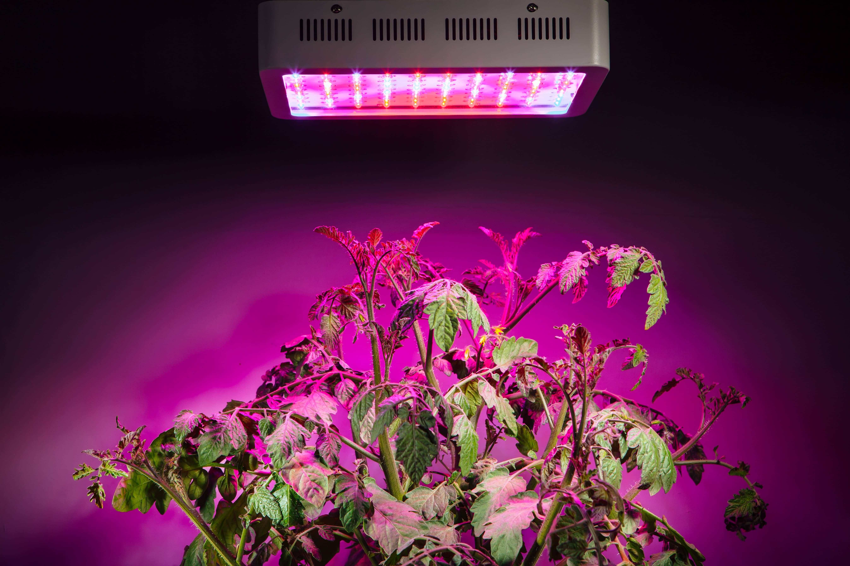 LED Grow Light on Plants
