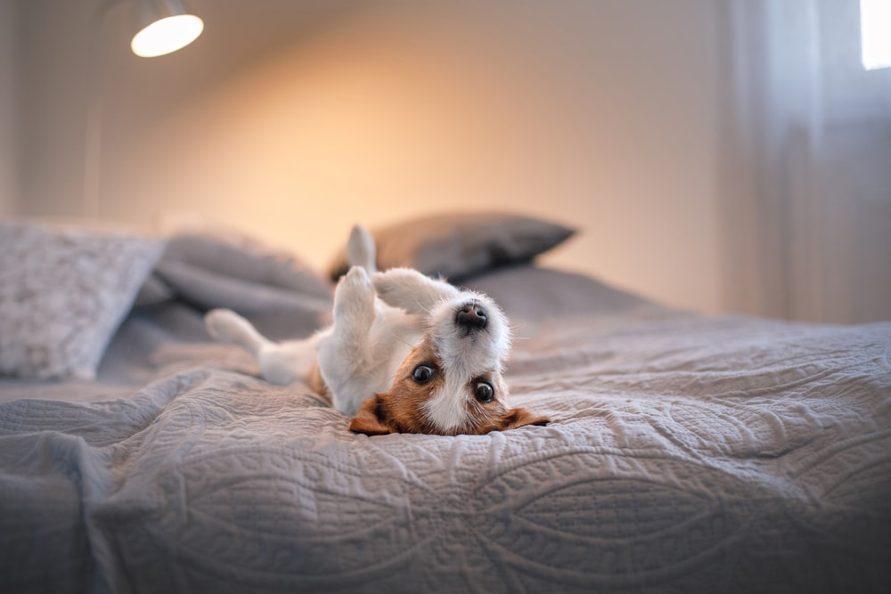 Keep Your Pets Out - 9 Tips for Maximizing Your Sleep Environment (Check Out Number 2!)
