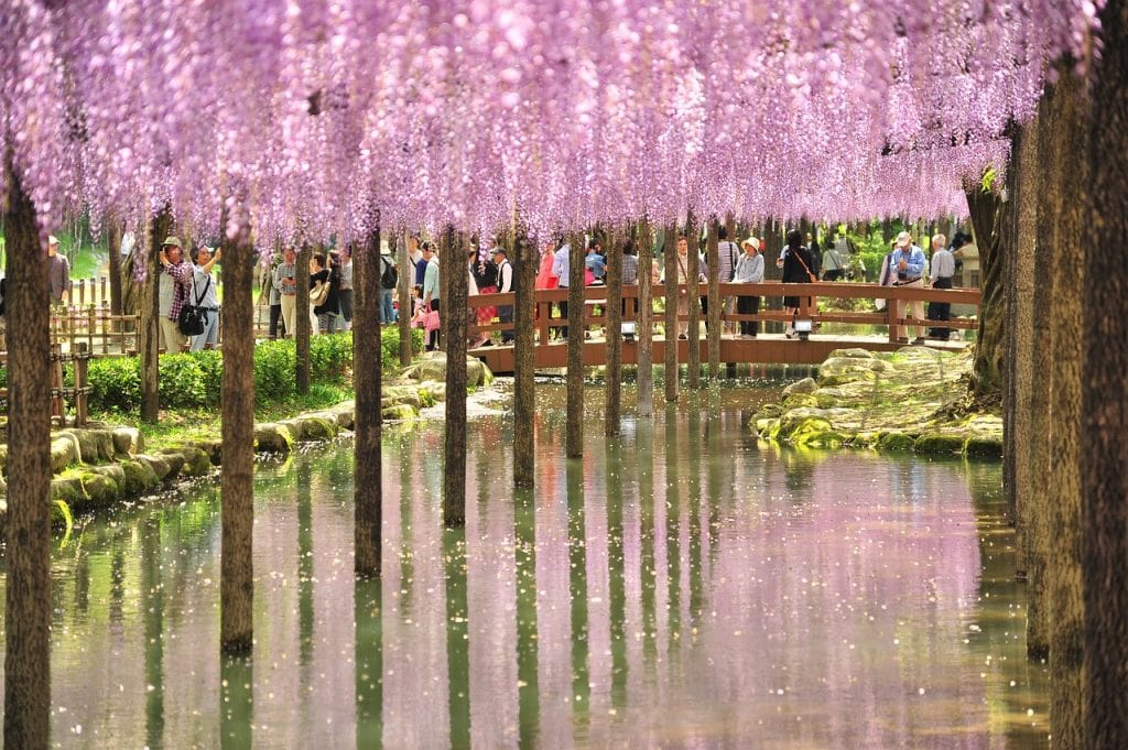 Kitakyushu flower tunnels 1024x681 - Japan Exotic Vacation- 8 Best Things to Do