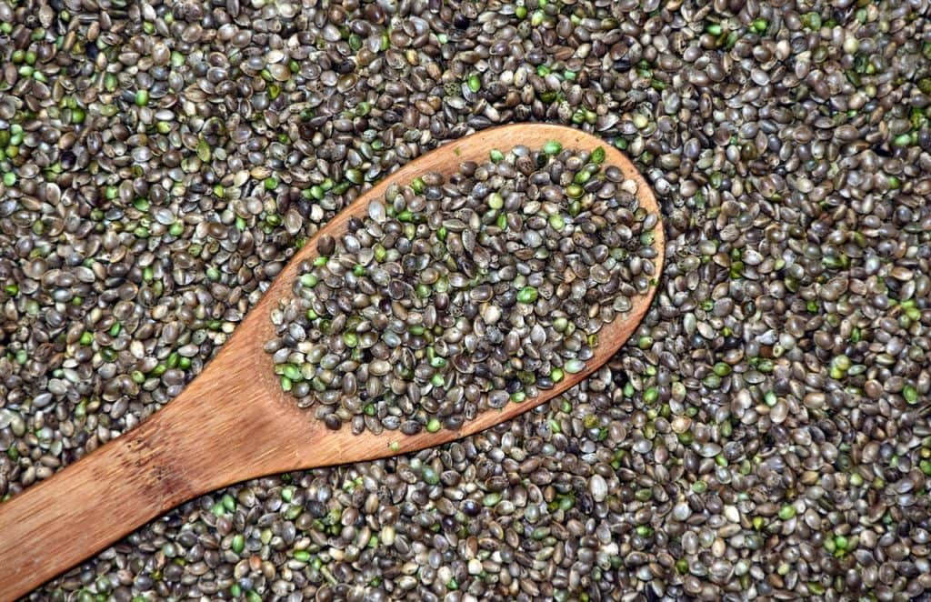 hemp seed 1024x662 - Should You Add Hemp to Your Diet?