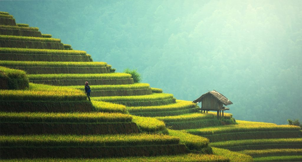 Rice terrace 1024x549 - Top 6 places to visit in Pondicherry