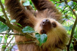Costa Rica Cruise Wild Life 300x200 - Best Cruises for Wildlife Fanatics