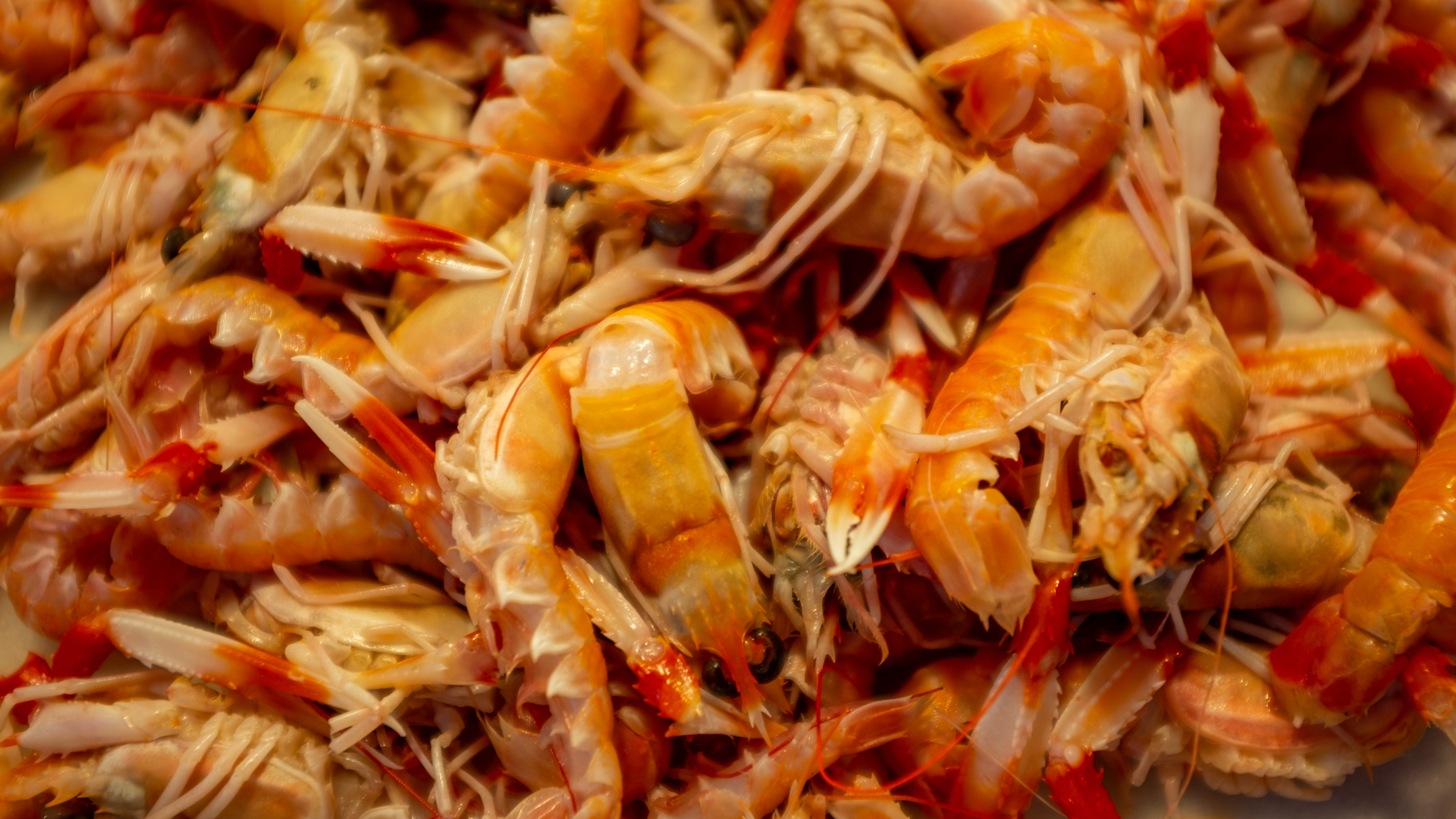 How to Cook Frozen Shrimp For The First Time