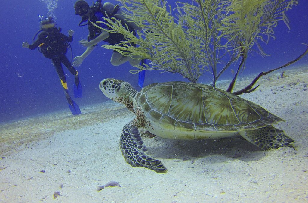 SCUBA 1024x674 - The Best Vacations For Water Lovers