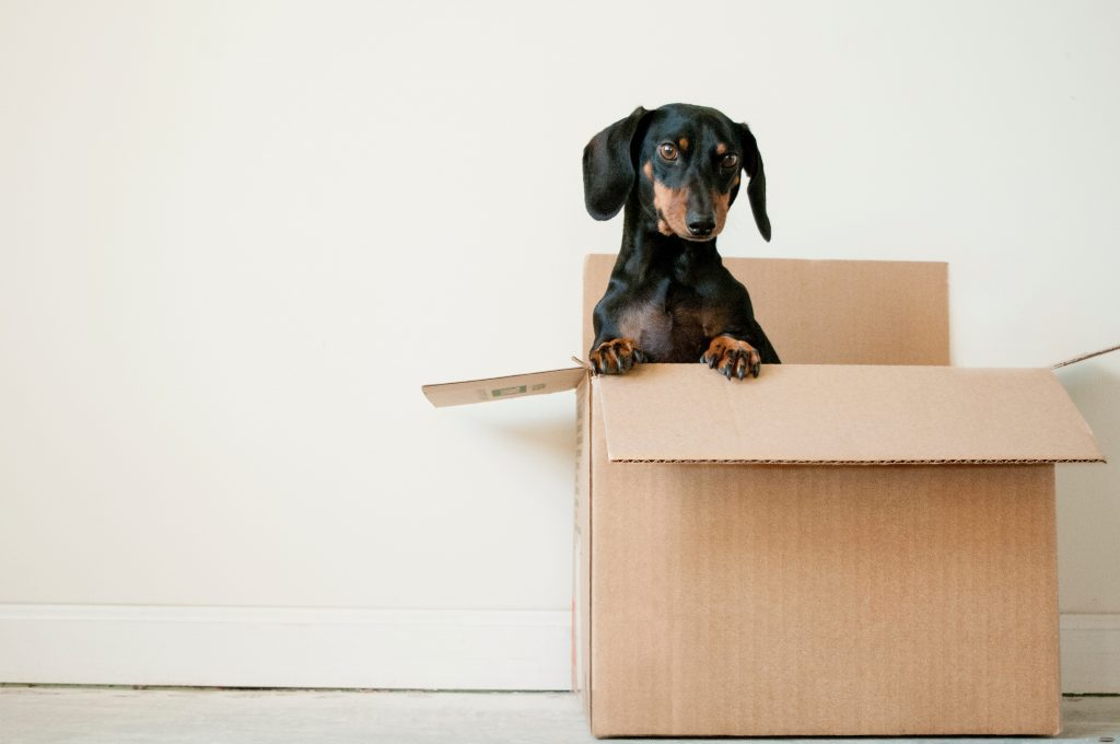Packing for a move 1024x680 - Found a New Place to Live? How to Move Easily