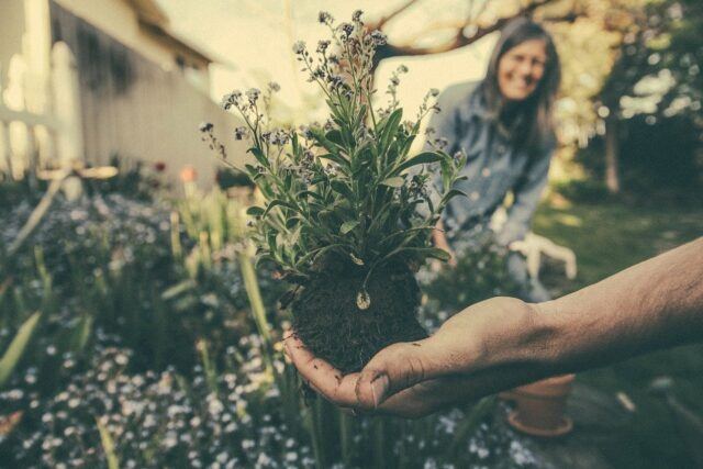 Starting a Landscaping Business: What You'll Need