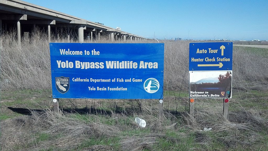 Yolo Bypass Wildlife Area 1 - Moving to Sacramento? – See what the city has to offer