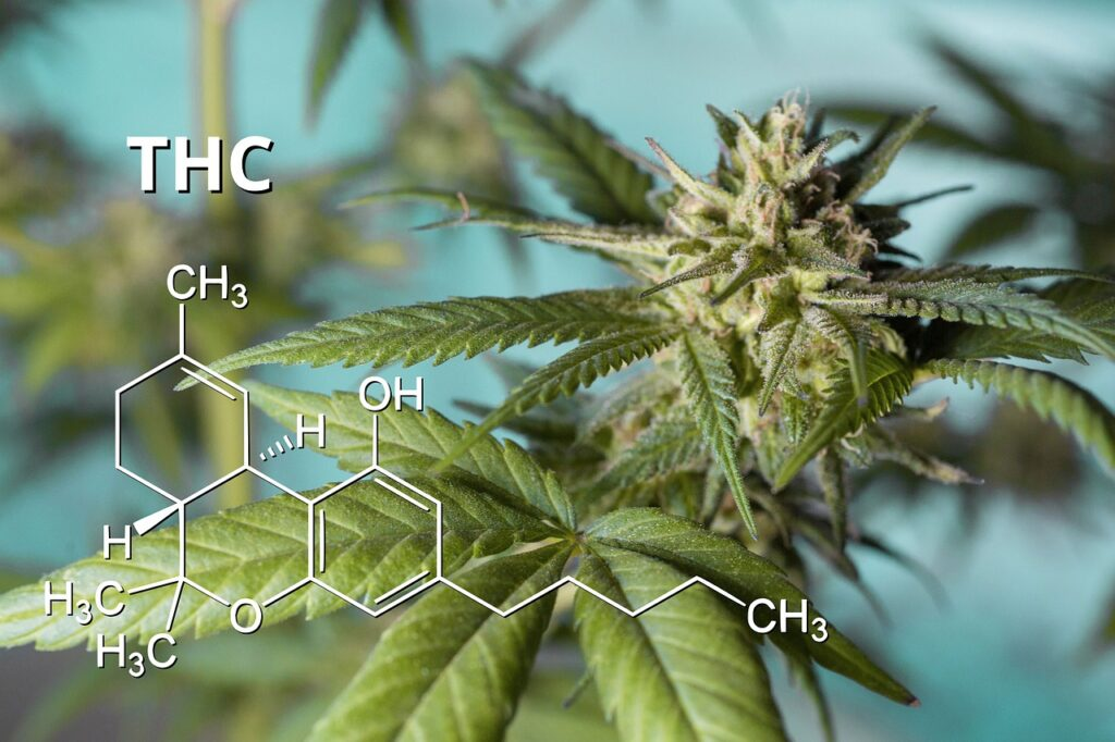thc 5400191 1280 1024x682 - Why is the Delta 8 Flower the Most Popular CBD Product in the Market Today?