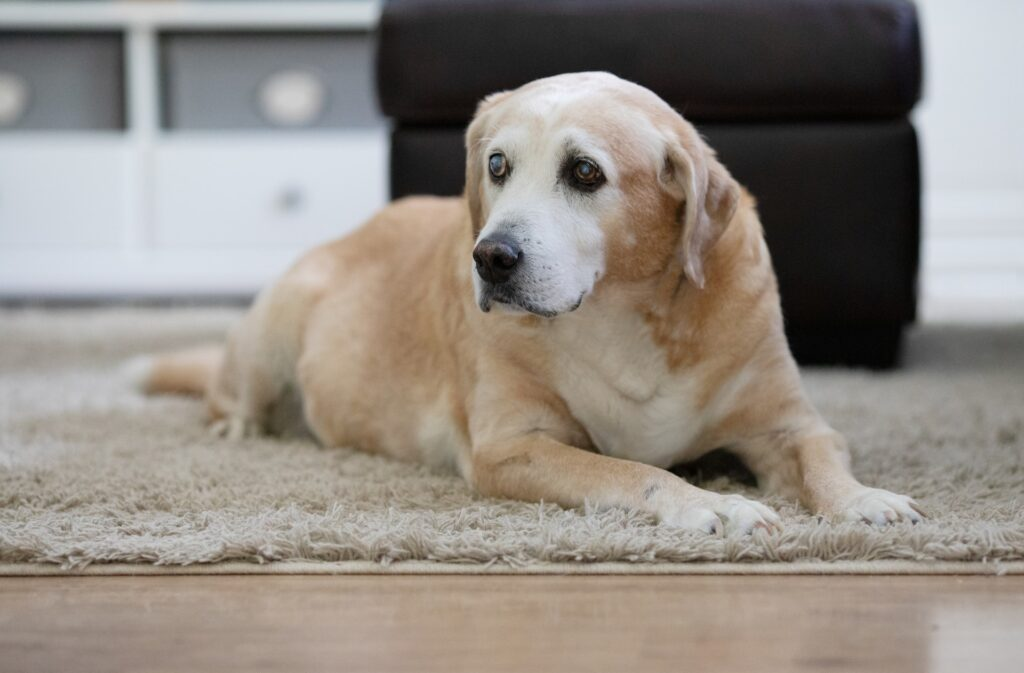 reba spike FnMh0z IeBY unsplash 1024x673 - Health Issues to Look for When You Have an Older Dog