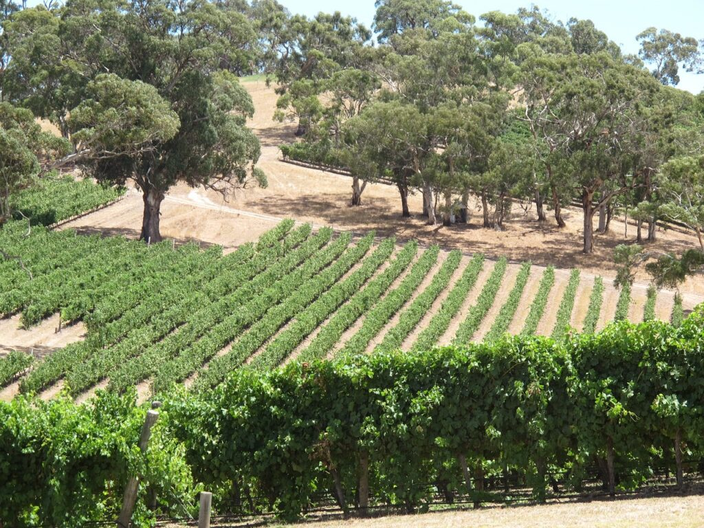 longview winery 1364488 1280 1024x768 - 5 things you can do this weekend in South Australia Getaway