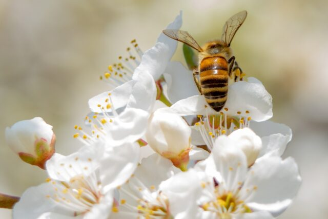 What You Need to Know About Pests and Allergic Reactions
